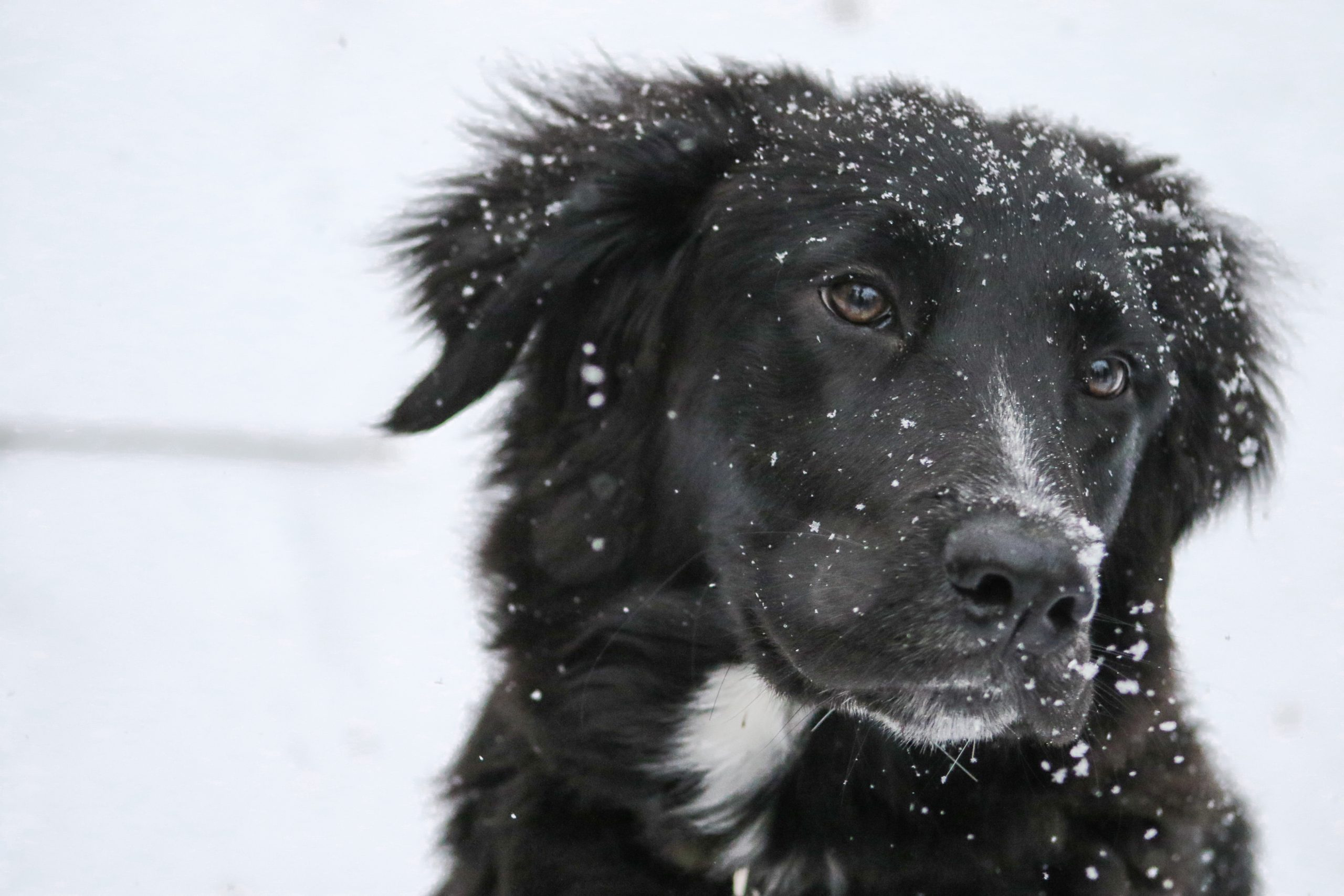 pets winter cold